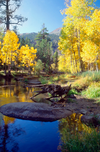Inyo National Forest「Reflection of trees in a lake, Inyo National Forest, California, USA」:スマホ壁紙(10)