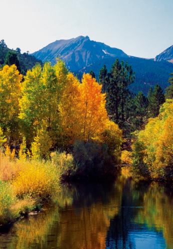 インヨー国有林「Reflection of trees in a river, Inyo National Forest, California, USA」:スマホ壁紙(6)