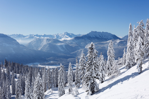 Salzkammergut「Austria, Styria, View of snowy fir tree on mountain」:スマホ壁紙(12)