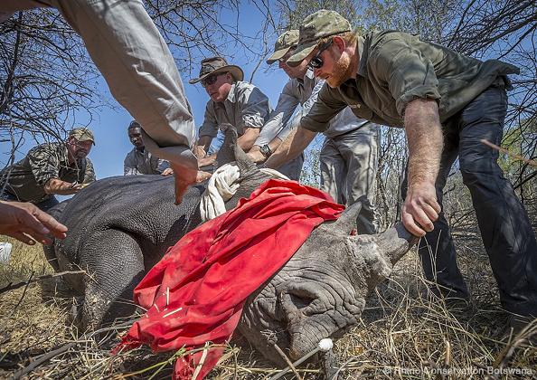 Botswana「Prince Harry Announced As Patron of Rhino Conservation Botswana」:写真・画像(1)[壁紙.com]