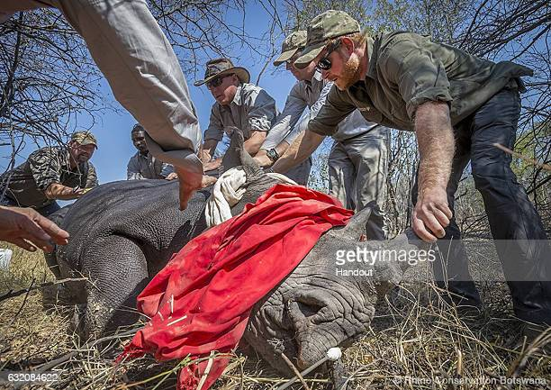 Prince Harry Announced As Patron of Rhino Conservation Botswana:ニュース(壁紙.com)