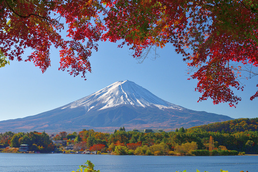Lake Kawaguchiko「Mt Fuji and Autumn Leaf Color: View from Lake Kawaguchi, Japan」:スマホ壁紙(12)