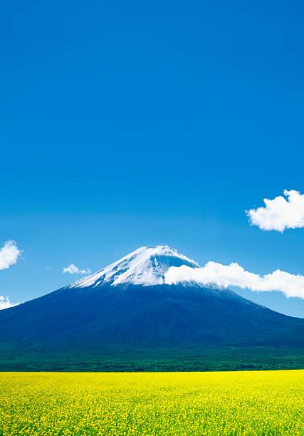 菜の花畑のバックに富士山のまとめ:2010年05月10日(壁紙.com)