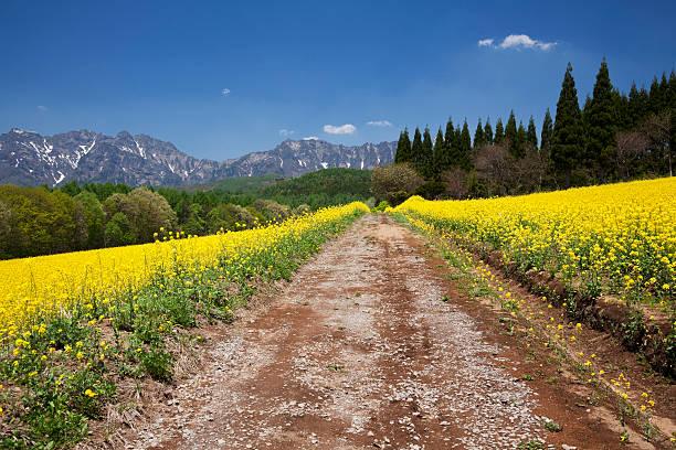 Mt. Togakushi and oilseed rape field, Nagano Prefecture, Honshu, Japan:スマホ壁紙(壁紙.com)