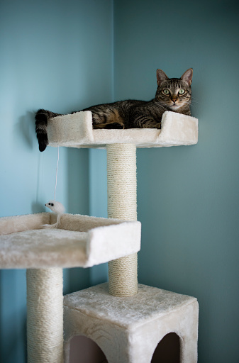 Scratching Post「Cat lying on a scratching post at home」:スマホ壁紙(8)