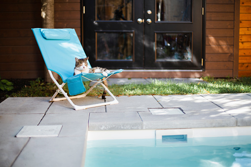 Outdoor Chair「A cat lying on a chair near a swimming pool」:スマホ壁紙(1)