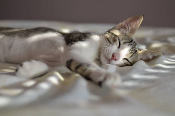 Cat lying on a bed in sunlight:スマホ壁紙(壁紙.com)