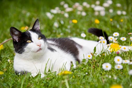 Animal Themes「Cat lying on flowering meadow」:スマホ壁紙(8)