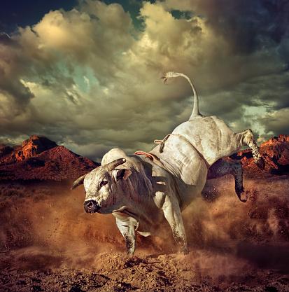 Horned「Bucking bull kicking dirt in desert」:スマホ壁紙(11)