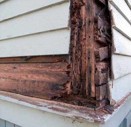Rotting「Wood Rot」:スマホ壁紙(10)