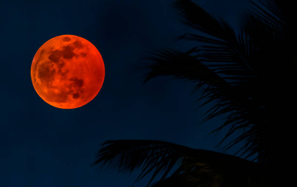 Lunar eclipse by palm tree fronds:スマホ壁紙(壁紙.com)