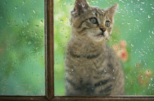 Kitten「Kitten through rainy window」:スマホ壁紙(9)