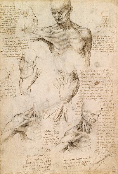 Biology「Shoulder By Leonardo Da Vinci」:写真・画像(12)[壁紙.com]