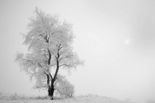 Single Tree「Snowy Tree in Fog」:スマホ壁紙(10)