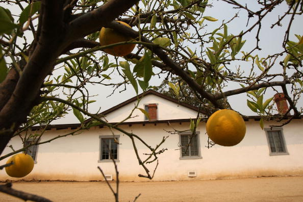 Orange - Fruit「L.A.'s Pio Pico State Historic Park On List To Be Possibly Shuttered」:写真・画像(4)[壁紙.com]