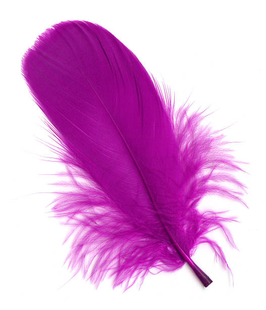 Pink feather isolated on white background:スマホ壁紙(壁紙.com)