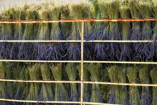 French Lavender「Bunched lavender flowers being dried in the sun」:スマホ壁紙(19)