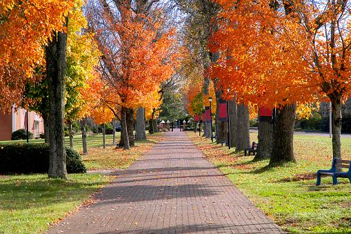 秋「秋の紅葉の大学のキャンパス」:スマホ壁紙(3)