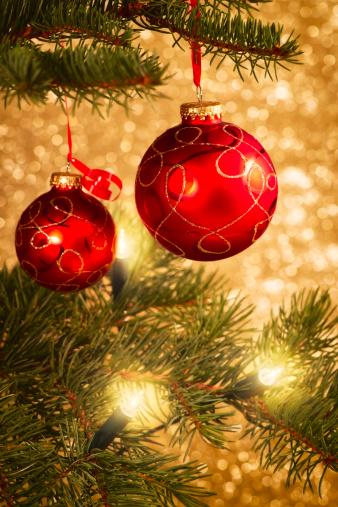 マツ科「クリスマスツリーの」:スマホ壁紙(19)