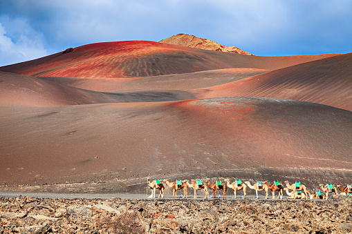 Atlantic Islands「Riding camels are waiting for tourists in Timanfaya National Park, Lanzarote, Canary Islands.」:スマホ壁紙(14)