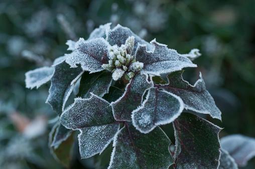 Blossom「Frozen plant, close-up」:スマホ壁紙(16)