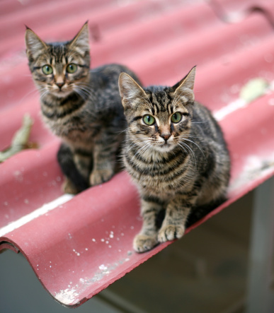 Mixed-Breed Cat「Cats on the roof」:スマホ壁紙(15)