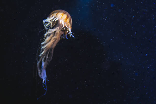 Jellyfish in deep space:スマホ壁紙(壁紙.com)