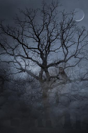 Multiple Exposure「Spooky cemetery and foggy night and Barn Owl」:スマホ壁紙(1)
