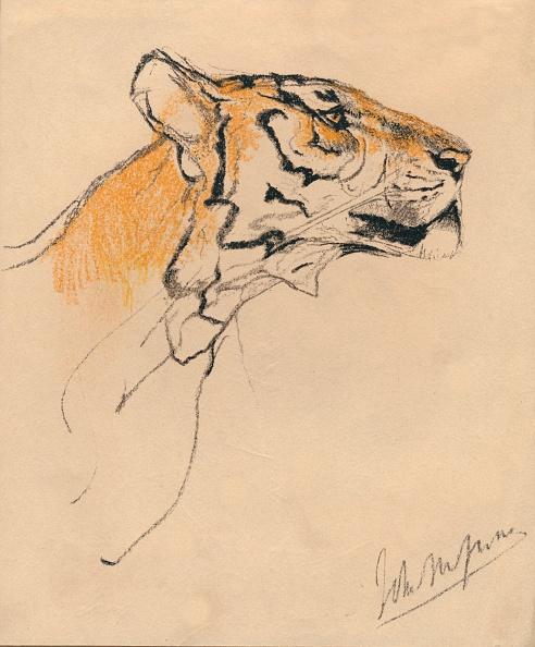 クレヨン「Head of a Tiger」:写真・画像(16)[壁紙.com]