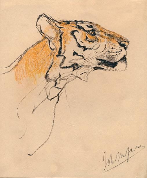 Head of a Tiger:ニュース(壁紙.com)