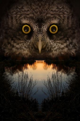 Multiple Exposure「Owl Face and Lake at Sunset」:スマホ壁紙(13)