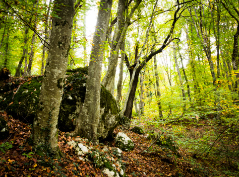 Grove「magical and bright beech forest」:スマホ壁紙(18)