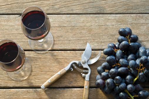 季節「ワインのブドウの収穫」:スマホ壁紙(16)