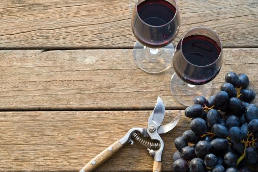Picnic Table「Wine Grape Harvest」:スマホ壁紙(19)