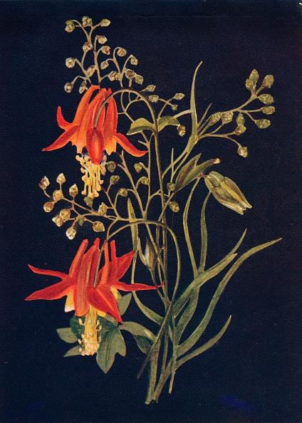 静物「Columbine,  c1915, (1915)」:写真・画像(18)[壁紙.com]