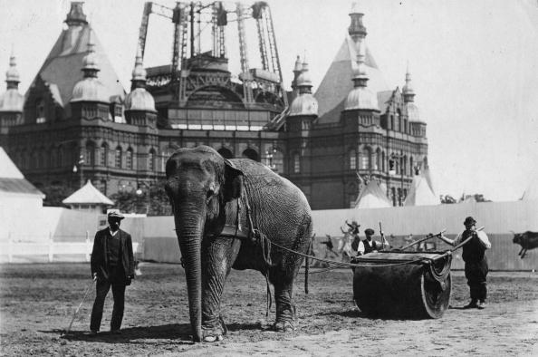 Domestic Animals「Working Elephant」:写真・画像(3)[壁紙.com]