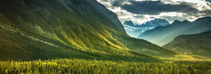 常緑樹「フォレスト ビュー マウント ランドル バンフ国立公園のパノラマ」:スマホ壁紙(16)