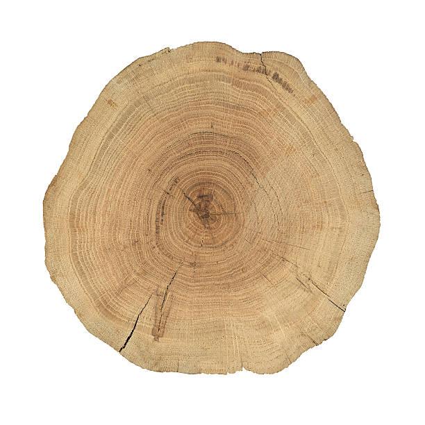 Wooden cross section:スマホ壁紙(壁紙.com)