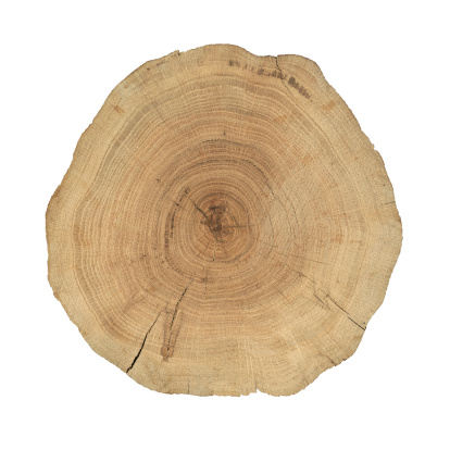 Tree Ring「Wooden cross section」:スマホ壁紙(4)