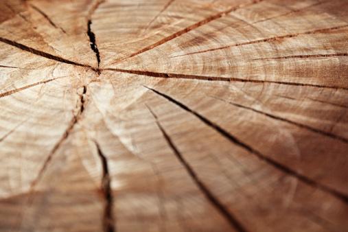 Log「Wooden cross section」:スマホ壁紙(2)