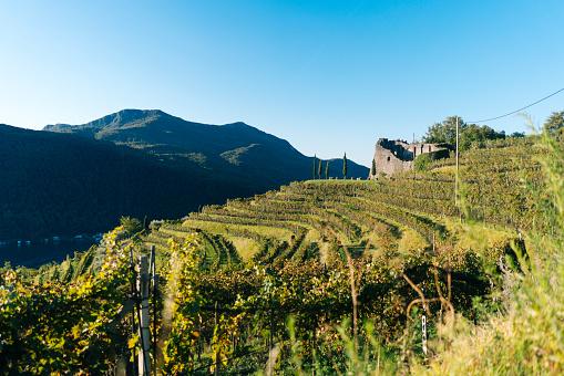 澄んだ空「View of lush vineyards and distant mountains」:スマホ壁紙(2)