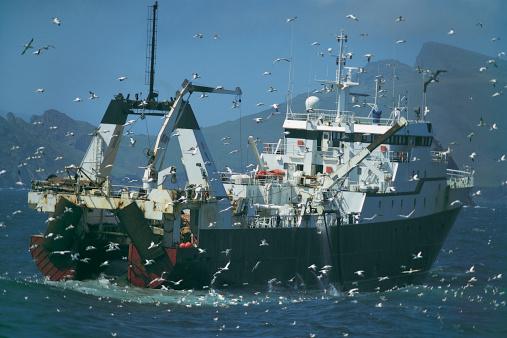 Flock Of Birds「Fishing Trawler Followed by a Large Flock of Seagulls, St Kilda, Orkney Islands, Scotland」:スマホ壁紙(19)