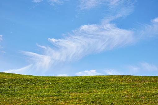 緑色「Greenery below blue skies」:スマホ壁紙(7)
