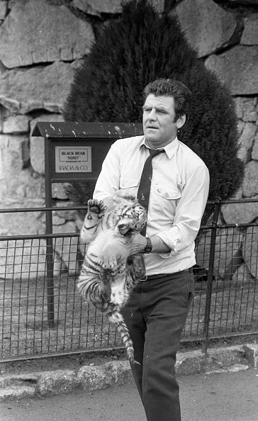 Big Cat「Siberian Tigers at Dublin Zoo 1988」:写真・画像(11)[壁紙.com]