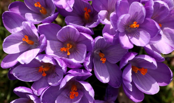 Stamen「The First Signs Of Spring Are Seen At Kew Gardens」:写真・画像(13)[壁紙.com]