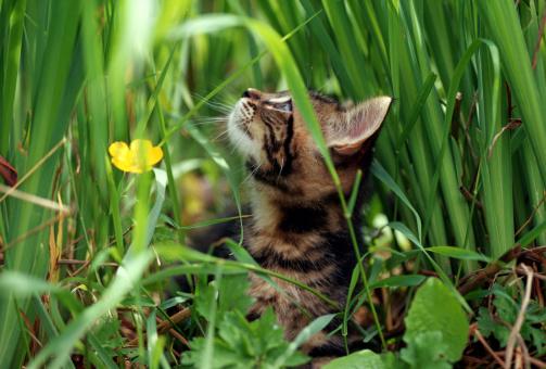 Kitten「Vigilant cat」:スマホ壁紙(16)