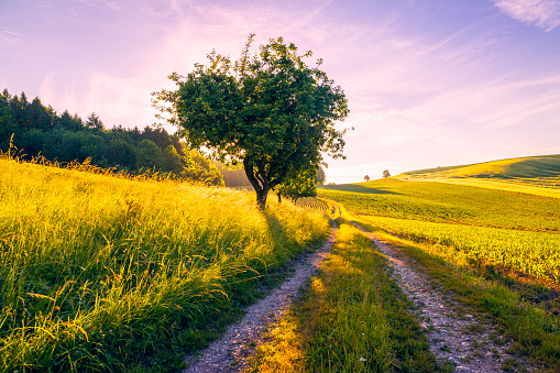 Footpath「Austria, Innviertel, field and dirt track in the morning」:スマホ壁紙(11)