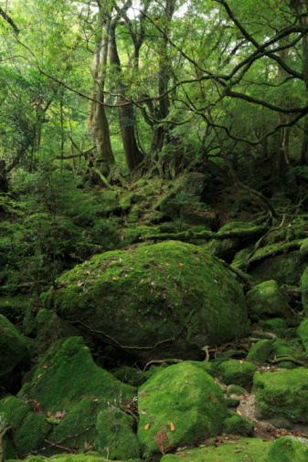 Moss「Shiratani Unsui Gorge, Yakushima, Kagoshima, Japan」:スマホ壁紙(5)