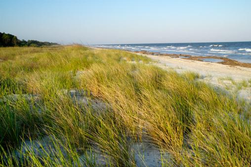 Coastline「Beach Dunes and Sea Grass」:スマホ壁紙(5)