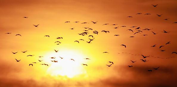 Bird「European Cranes Migrate South」:写真・画像(12)[壁紙.com]